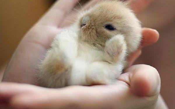 Bevorzugt Comment apprendre la propreté à un lapin nain ? CF55